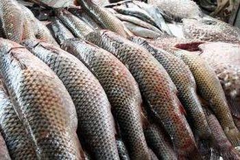 Обсяги вилову риби та добування інших водних біоресурсів у 2013 році.