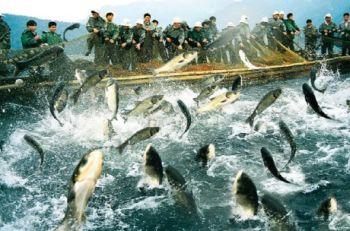 Позитивні тенденції зростання світового ринку аквакультури