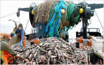 До Всесвітнього дня рибного господарства