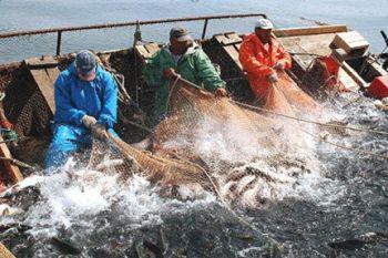 Обсяги вилову та виробництво рибної продукції за січень - липень 2013 року