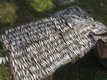 На Буковині у порушника вилучено 57 кг риби зі збитками у розмірі 91 тис. грн