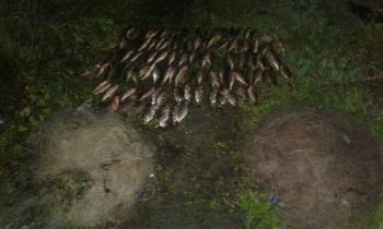 Виявлено 17 порушень зі збитками на 134 тис. грн за тиждень, - Чернівецький рибоохоронний патруль