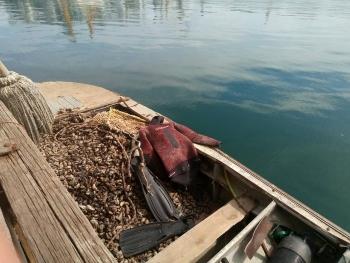 Вилучено майже 900 кг мідії зі збитками на 72 тис. грн, - Чорноморський рибоохоронний патруль