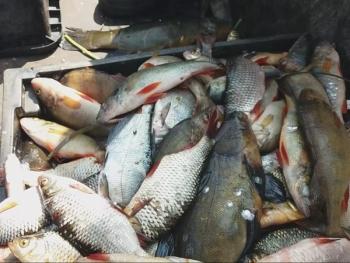 Рибоохоронний патруль Київщини затримав промисловика, який завдав збитків на 38 тис. грн
