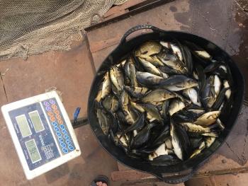 У Ладижинське водосховище випустили більше 3 тонн риби