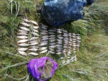 Протягом липня Миколаївський рибоохоронний патруль виявив 220 порушень та вилучив 382 кг водних біоресурсів