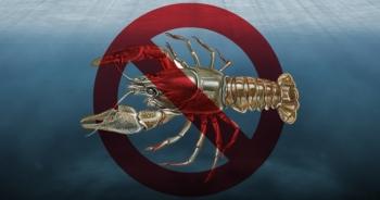 В українських водоймах розпочинається заборона на вилов раків