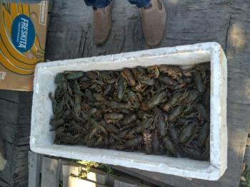 Протягом шести днів роботи виявлено порушень на 55,7 тис. грн, - Київський рибоохоронний патруль