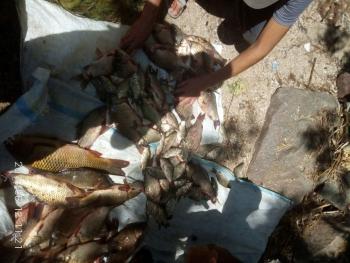 Вилучено близько 50 кг риби зі збитками на 11 тис. грн, - результат роботи Запорізького рибоохоронного патруля за тиждень