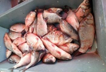 За два тижні зафіксовано майже 70 тис. грн збитків внаслідок порушень, - Одеський рибоохоронний патруль