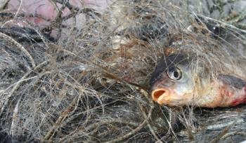 20 порушень зі збитками на майже 18 тис. грн виявлено рибоохоронним патрулем Закарпаття