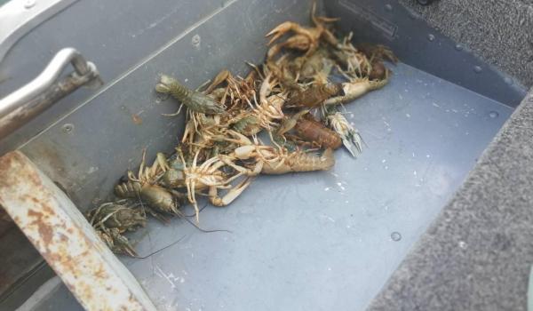 Протягом тижня на Буковині зафіксовано 32 порушення, - Чернівецький рибоохоронний патруль