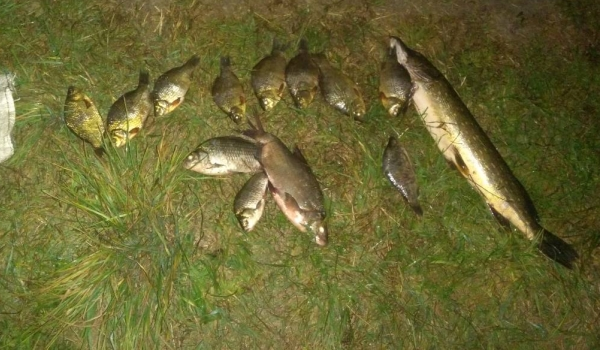 На озері Пісочне зафіксовано факт вилову червонокнижної риби, - Волинський рибоохоронний патруль