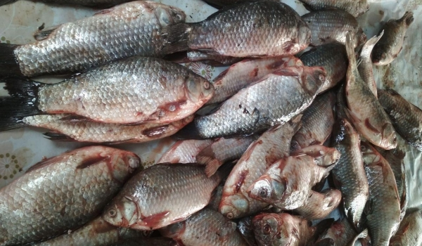 Протягом тижня виявлено 52 порушення, - Запорізький рибоохоронний патруль