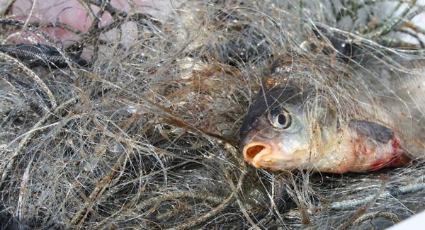 Виявлено десять порушень правил рибальства, - Луганський рибоохоронний патруль