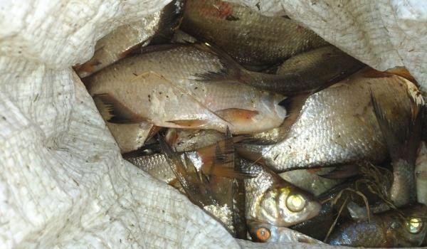 Виявлено 132 порушення та вилучено 141 кг незаконної риби, - рибоохоронний патруль Харківщини