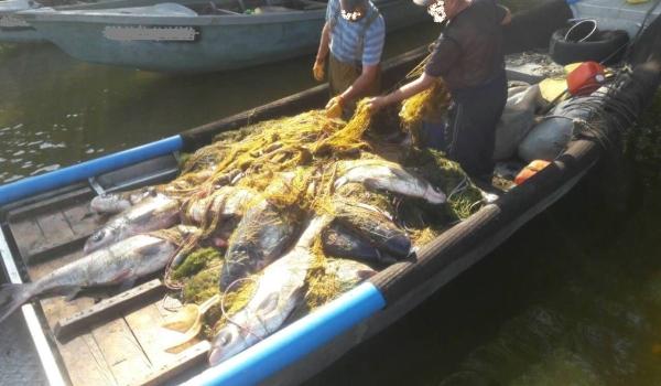 Зафіксовано майже 65 тис. грн збитків і вилучено понад 1200 кг незаконної риби, - рибоохоронний патруль Черкащини