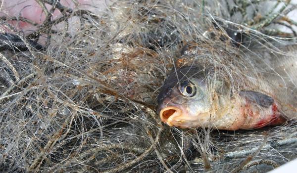 У каналі Дунай-Сасик викрито порушення зі збитками на понад 15 тис. грн, - рибоохоронний патруль Одещини