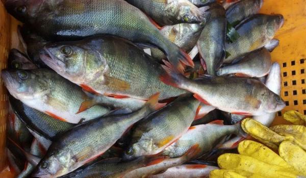Протягом тижня вилучено 281 кг незаконної риби, - рибоохоронний патруль Черкащини