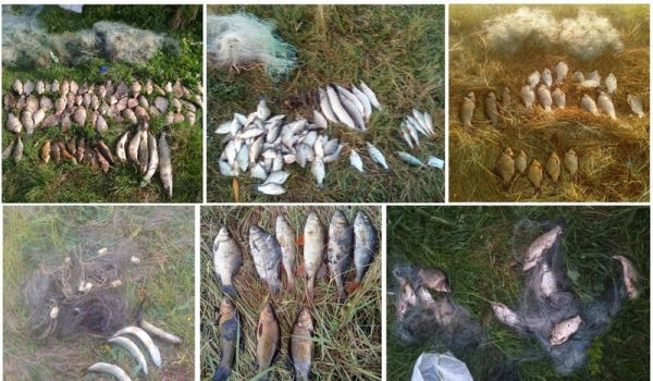 За тиждень викрито 27 порушень правил рибальства, - рибоохоронний патруль Чернігівщини