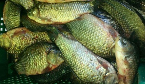За серпень виявлено 209 порушень зі збитками на 95 тис. грн, - рибоохоронний патруль Одещини