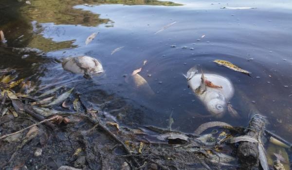 Встановлено причини загибелі риби у Ладижинському водосховищі, - рибоохоронний патруль Вінниччини