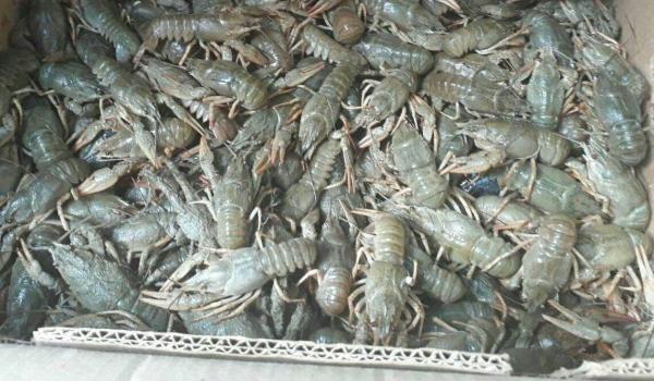 Виявлено 43 порушення та вилучено 236 кг водних біоресурсів, - рибоохоронний патруль Одещини