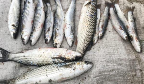 Протягом тижня зафіксовано 44 порушення зі збитками на понад 133 тис. грн, - Азовський рибоохоронний патруль