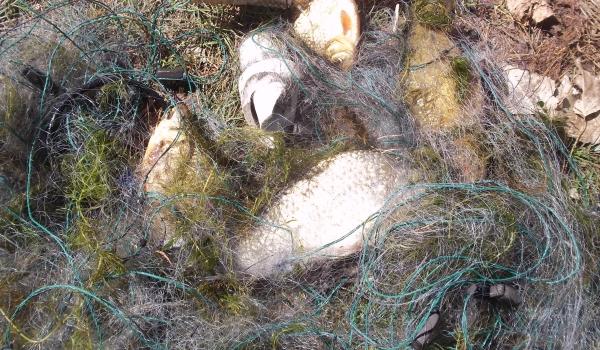 За тиждень Донецьким рибоохоронним патрулем зафіксовано 19 порушень правил рибальства