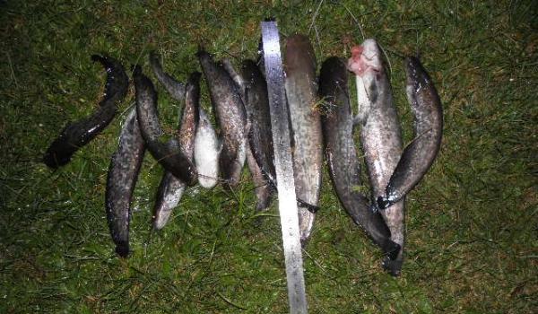 Протягом тижня рибоохоронний патруль Львівщини зафіксував понад 15 тис. грн збитків внаслідок 21 порушення