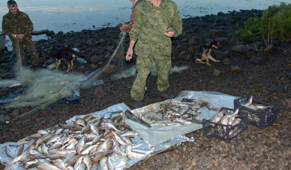 Близько 2 км сіток з 223 кг риби вилучено рибоохоронцями Черкащини з Кременчуцького водосховища