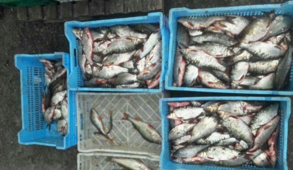 Рибоохоронний патруль Черкащини затримав порушників промислового рибальства, які завдали 110 тис. грн збитків