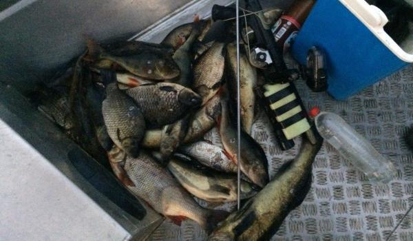 Київський рибоохоронний патруль затримав порушників, які завдали 11 тис. грн збитків
