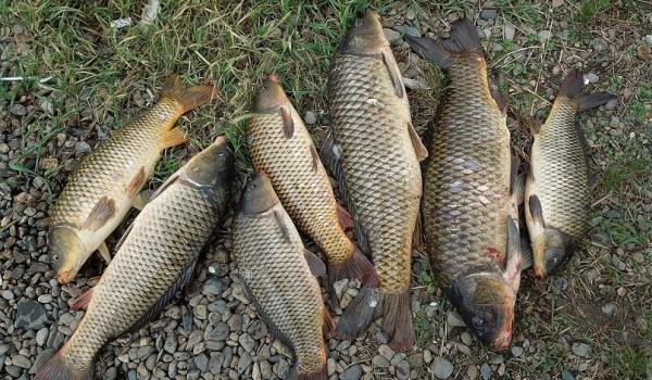 Протягом тижня зафіксовано 50 порушень та вилучено 120 кг біоресурсів, - рибоохоронний патруль Одещини