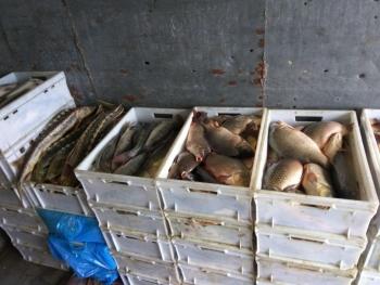 Азовський рибоохоронний патруль спільно з поліцією та прикордонною службою затримали порушника, який незаконно перевозив 393 кг червонокнижного осетра