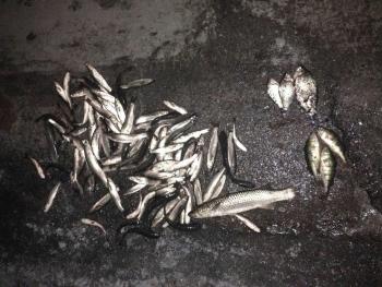 Порушник порибалив зі збитками на 72 тис грн, - Азовський рибоохоронний патруль