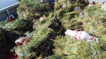 На Київському водосховищі встановлено 500 нерестових гнізд