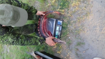 Одеський рибоохоронний патруль затримав порушницю з червонокнижною севрюгою