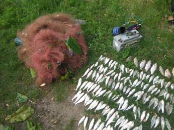 Використовуючи електровудку, порушники завдали збитків на 82 тис. грн, - Миколаївський рибоохоронний патруль