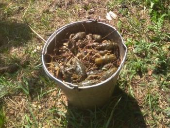 За місяць зафіксовано 125 тис. грн збитків, - Житомирський рибоохоронний патруль