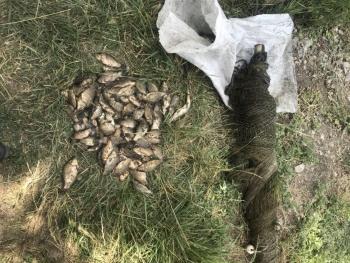 З початку липня виявлено 85 порушень правил рибальства, - Дніпропетровський рибоохоронний патруль