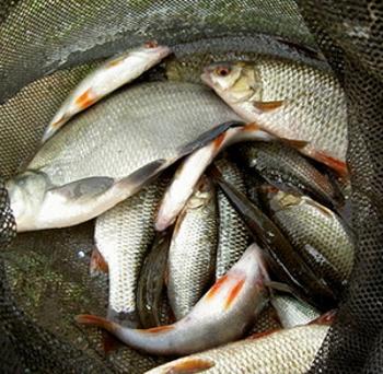Рівненський рибоохоронний патруль зафіксував 381 порушення з початку року