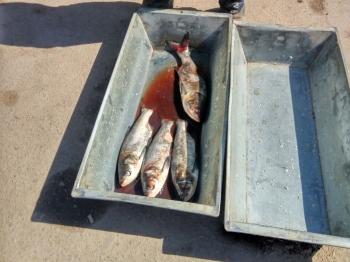 Вінницьким рибоохоронним патрулем нараховано збитків за порушення на суму 128 тис. грн