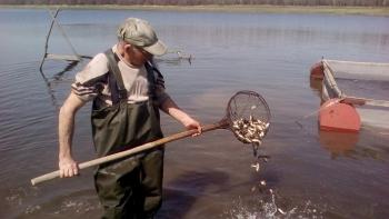 У червні до водойм Донецької області вселено близько 165 тис. екз. риби