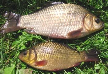 Запорізький рибоохоронний патруль дає роз'яснення на типові запитання від рибалок