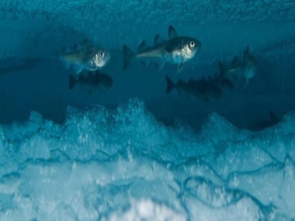 Оптимальні умови зимівлі риби, - Держрибагентство