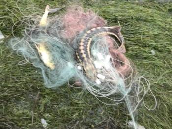 В Азовському морі зафіксовано три порушення зі збитками на 192 тис. грн