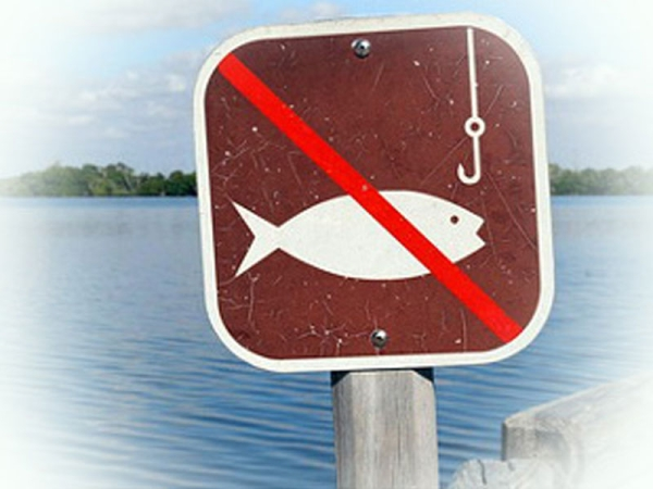 З 15 лютого встановлено заборону на вилов камбали (глоси) на Одещині та у Чорному морі