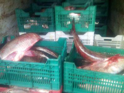 Протягом двох днів зафіксовано майже 55 тис. грн збитків та вилучено понад тонну риби, - Одеський рибоохоронний патруль