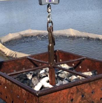 Водойми Київщини поповнилися 8 тоннами риби, - Київський рибоохоронний патруль